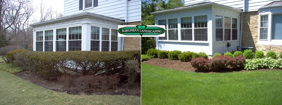 Before And After Residential Planting