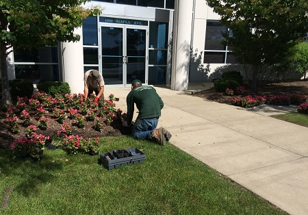 Commercial Flower Planting