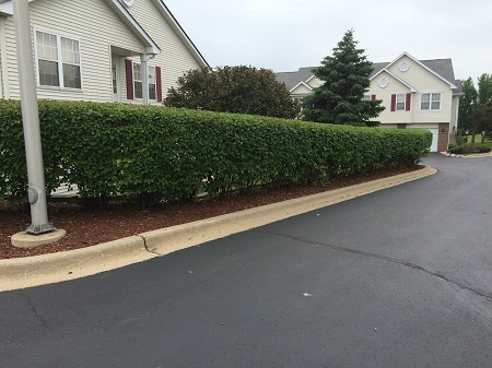 Trimming Formal Hedge