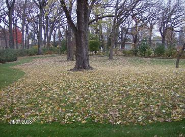 Leaf Clean_Up